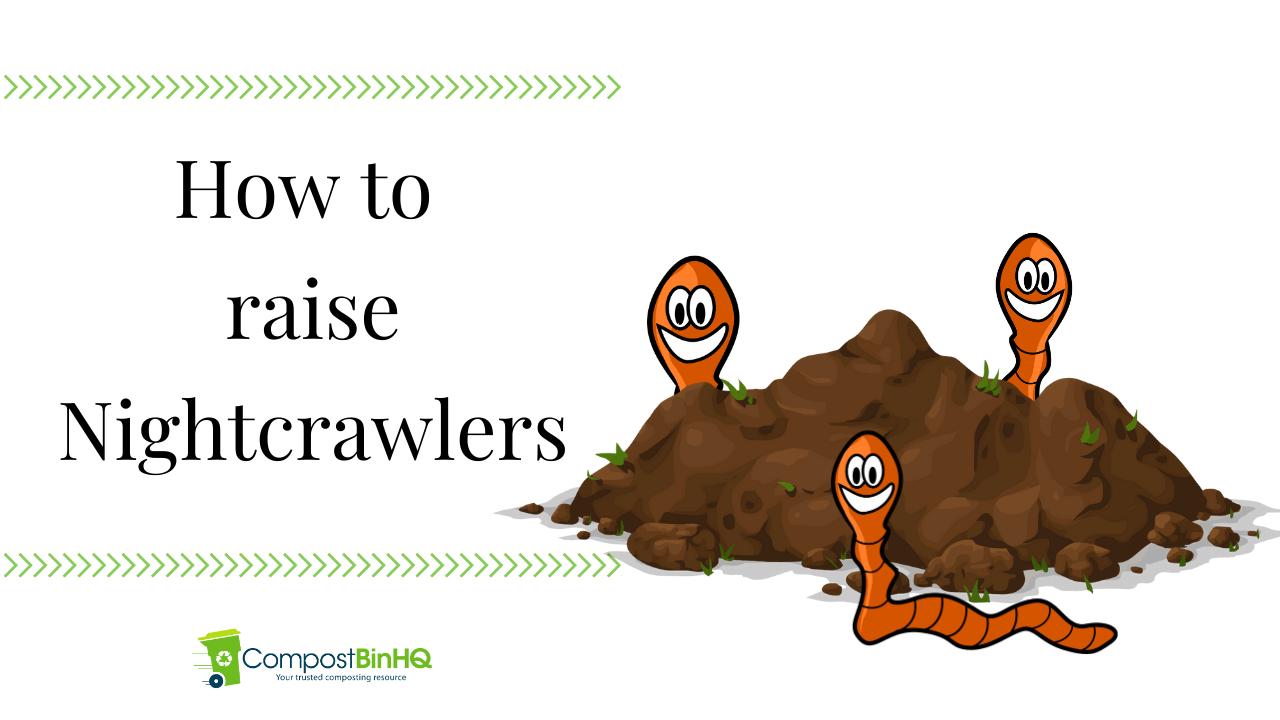 How to raise Nightcrawlers